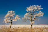 Fabulous wonderful trees covered with rime — Stock Photo
