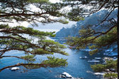 Beautiful seascape with evergreen boughs of cedar — Stock Photo