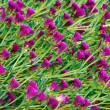 Pattern of violet flowers - Stock Photo