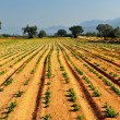 Vegetable farm - Stock Photo