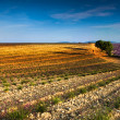 Early morning in Provence - Stock Photo