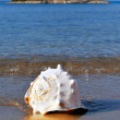 Seashell on Mediterranean beach - Stock Photo