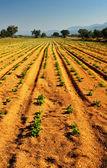 Vegetable farm — Stock Photo