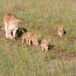 Stock Photo: Mother And Cubs