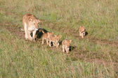 Mother And Cubs — Stock Photo
