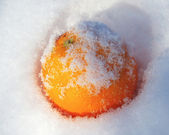 Mellow orange in white fresh snow in winter — Zdjęcie stockowe