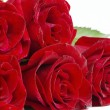 Red roses — Stock Photo #4820219