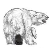 Isbjörn — Stockfoto