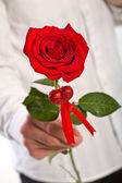 Man hand holding one red rose — Stock Photo