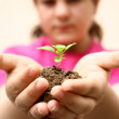 Growth sapling — Stock Photo
