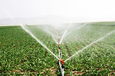 Irrigation sprinklers water a farm field against late afternoon — Stock Photo
