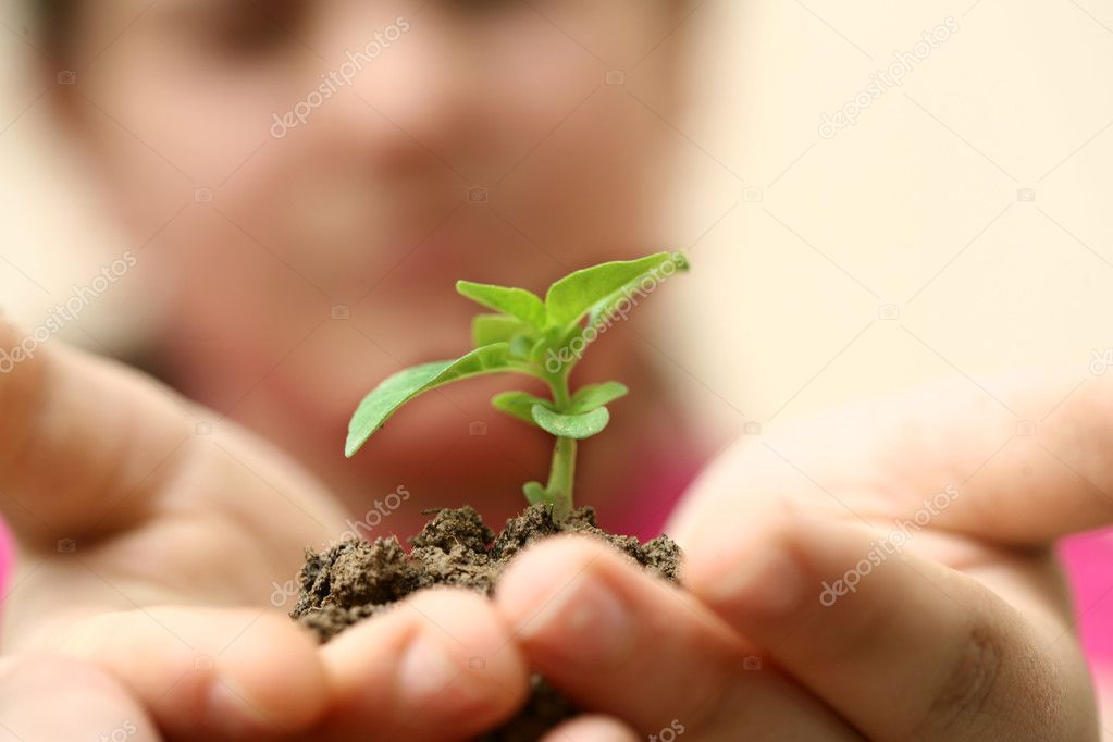 Seedlings in the hands of a girl image — Stock Photo #4821086