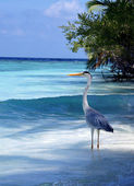 The heron costs on an ocean coast — Stock Photo