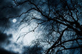 Scary dark scenery with naked trees, full moon and clouds — Photo