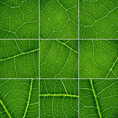 Green backgrounds set. Oak leaf closeup, super macro. — Stock Photo