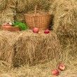 Stock Photo: Rural still-life