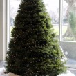 Christmas Tree in Daylight — Stock Photo #4648810