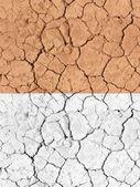 Texture tilable - sol désertique sec — Photo