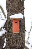 гнездования коробки снегом — Стоковое фото