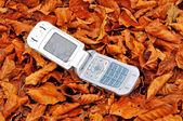 Mobile phone lying over fallen leaves — Foto Stock