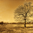 Lonely autumn oak tree retro photo — Stock Photo