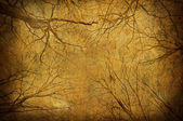 Grunge tree branches upon sky — Stock Photo