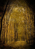 Yellow valley among beeches trees — Foto de Stock