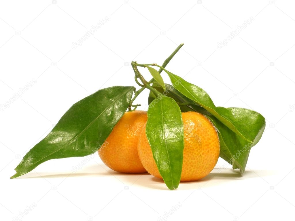 Tangerines with leaves and on the white isolate background         Stock Photo #4326648