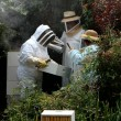 Stock Photo: Beekeeping lessons