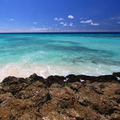 Rocky coastline of Barbados — Stock Photo