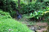 Waterfall in Saint Lucia — Stock Photo