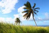 Saint Kitts Landscape — Stock Photo