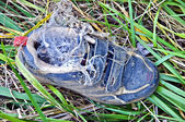 Discarded Shoe in the Grass — Stock Photo