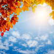Autumn yellow leaves in sun rays — Stock Photo