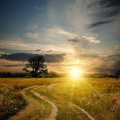 Field and dirt road to sunset — Stock Photo