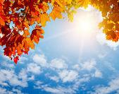 Autumn yellow leaves in sun rays — Stock Photo