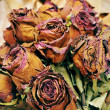 Dried roses - Stock Photo