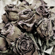 Dried roses — Stock Photo #3964947