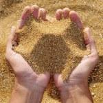 άμμο — Φωτογραφία Αρχείου #3988706