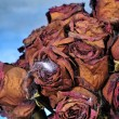 Scary bouquet - Stockfoto
