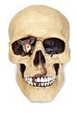Halloween's skull — Stock Photo