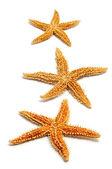 Estrelas do mar — Fotografia Stock