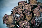 Bouquet di halloween — Foto Stock