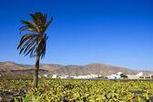 Lanzarote, Canary Islands, Spain — Stock Photo