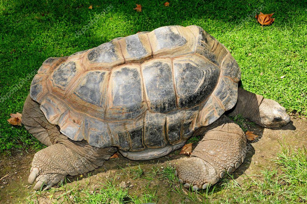 hermann s tortoise stock photo nito103 4275859