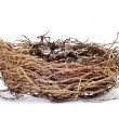 Nest - Stock Photo