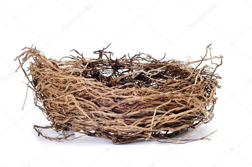 A nest isolated on a white background  Stock Photo #4307381