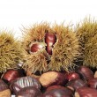 Brown Chestnuts — Stock Photo