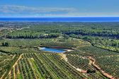 Olive groves in Costa Daurada, Spain — Stock Photo