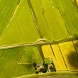 Aerial view of a landscape in Netherlands — Stock Photo